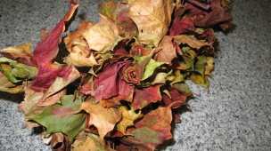 sycamore leaf roses