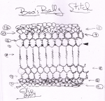 boas-belly-stitch-cropped